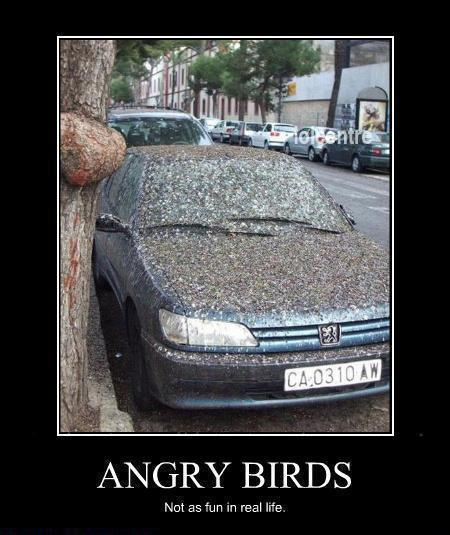 Nice-Funny-Angry-Birds-Spicy-Profile-Pics-WhatsApp-DP
