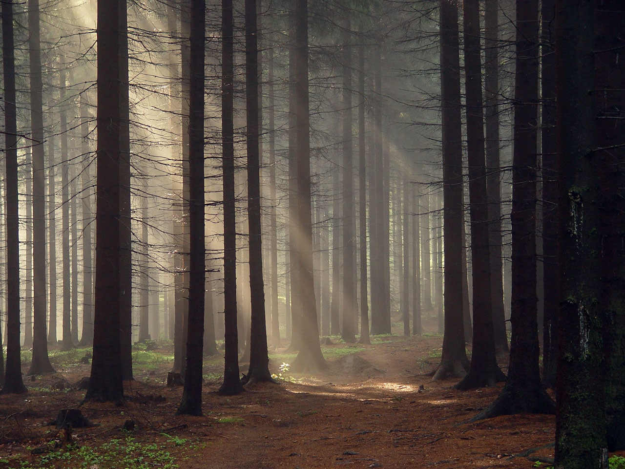 Cool desktop background, forest images