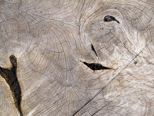 Weathered-Wood-Textures-Wooden-Textures-High-Quality-Background-Patterns