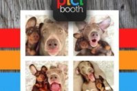 Top 7 Best Photo Booth Apps for iPhone and iPad